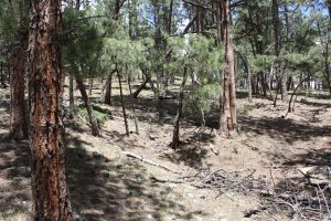 27425 TROUBLESOME GULCH ROAD EVERGREEN, CO