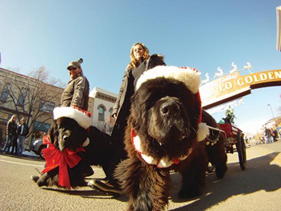 Dog pics with santa