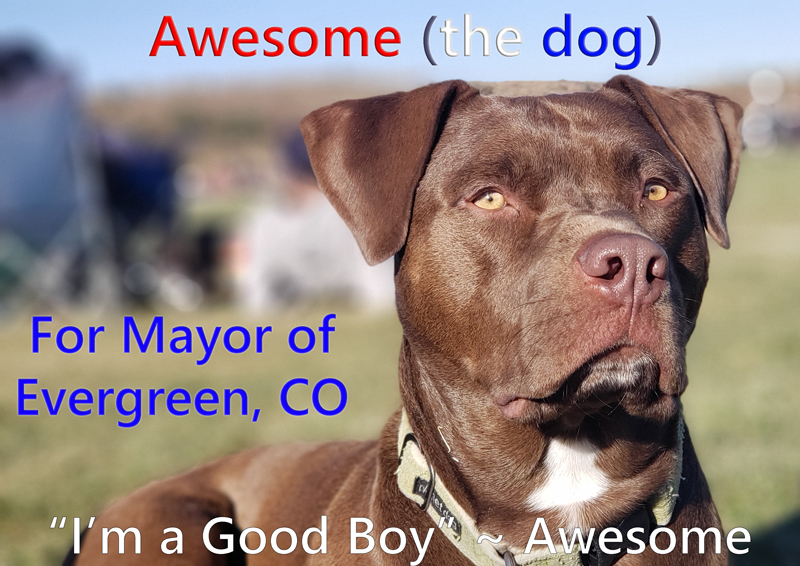 Awesome-the-dog-for-mayor