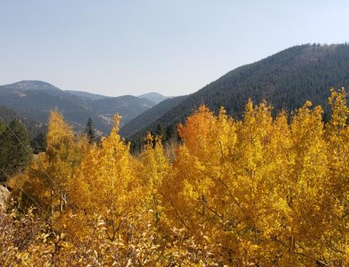 Homes For Sale Idaho Springs Colorado
