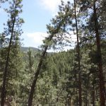 27425 Troublesome Gulch Evergreen CO Land For Sale