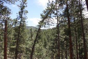 27425 troublesome gulch Evergreen, CO