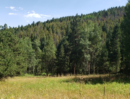 Land for Sale Conifer Colorado