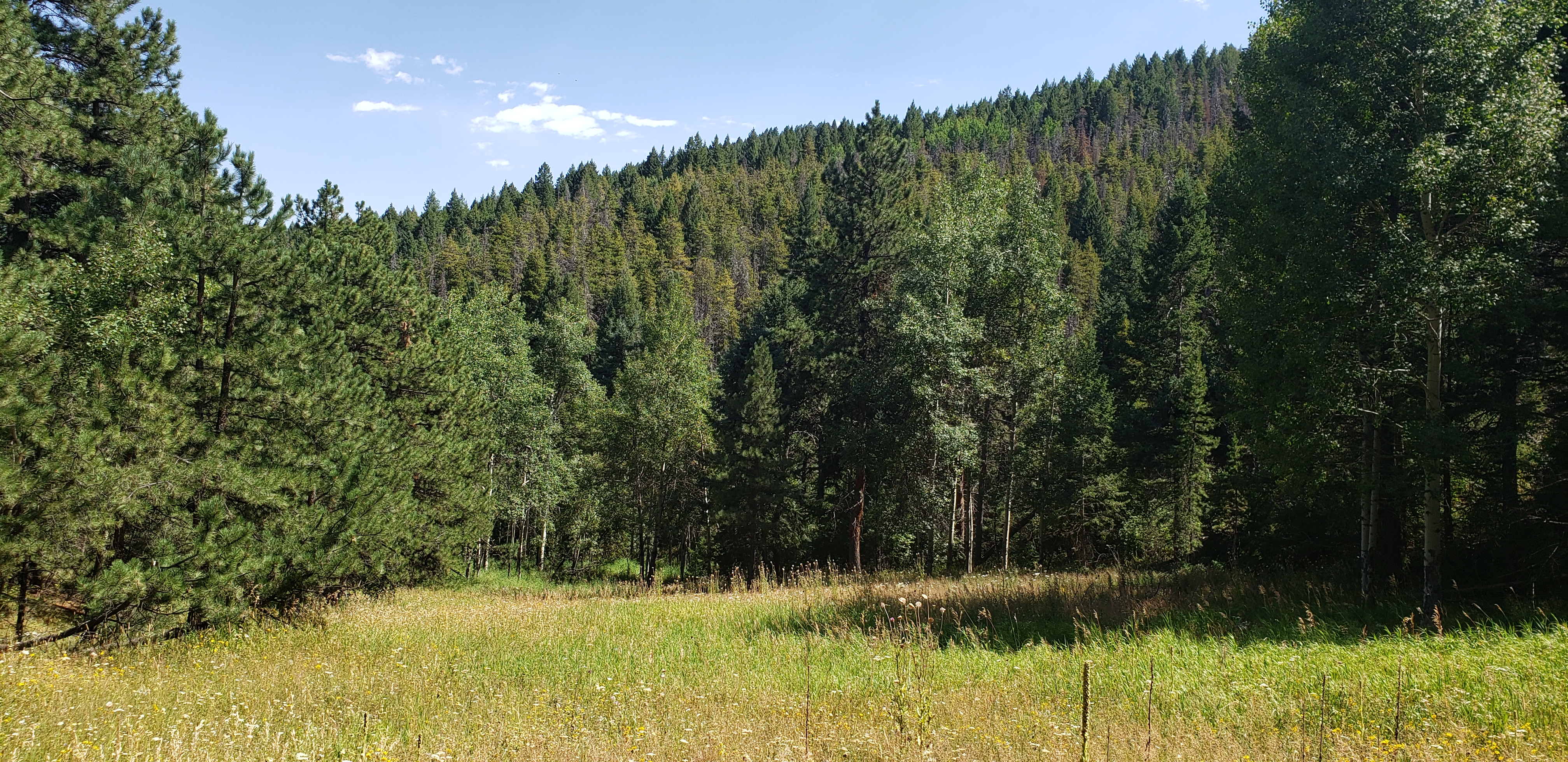Indian Springs Rd. Land for Sale Conifer, CO