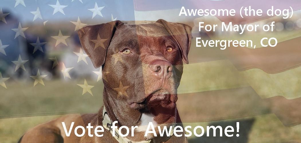 Evergreen Dog for Mayor